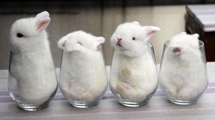 156_RPeeG_des-bebes-lapin-dans-des-verres-trop-mignon_x240-IHd